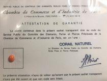 Corail naturel